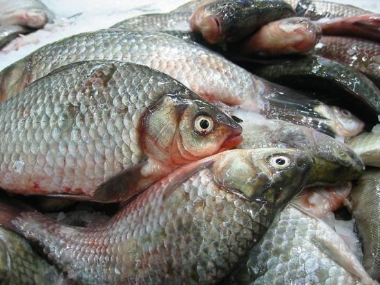 Как определить качество рыбной продукции