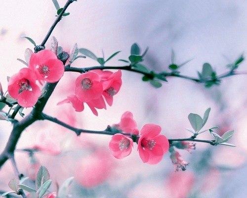 картинки на экран рабочего стола весна № 478086 загрузить