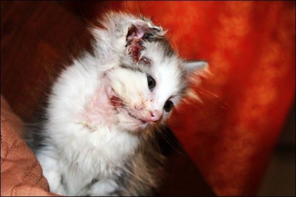 Картинки по запросу Девушка на руках котенок,