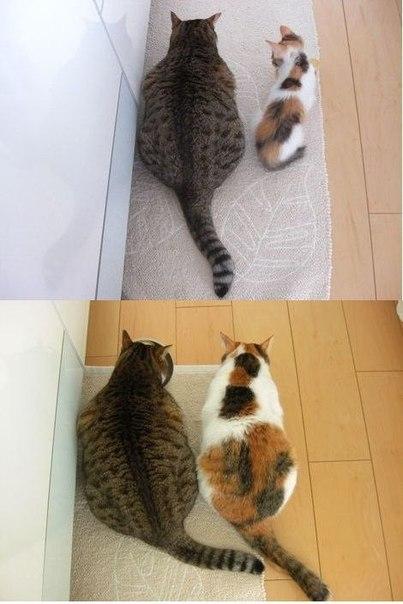 смотреть онлайн приколы про кошек: