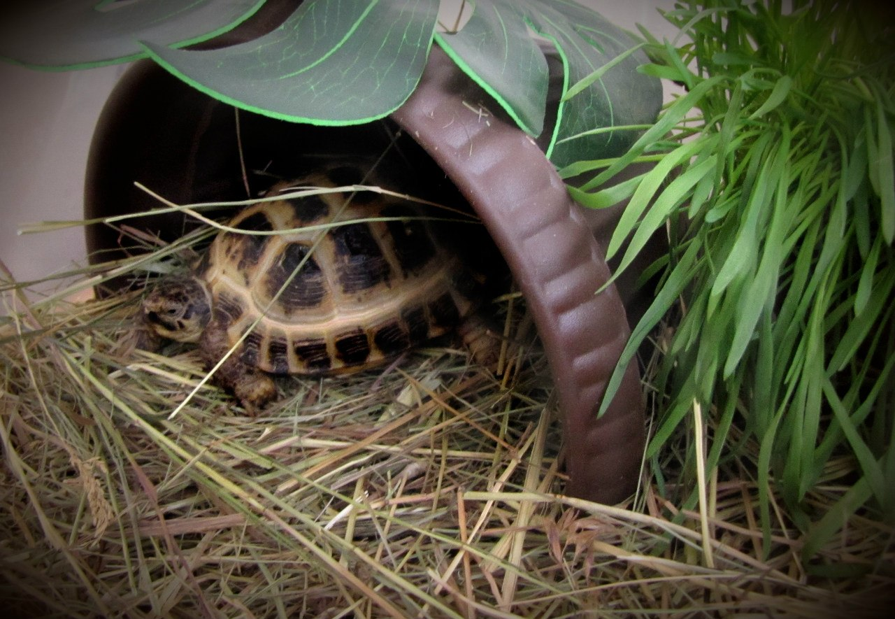 Как домики для сухопутных черепах своими руками
