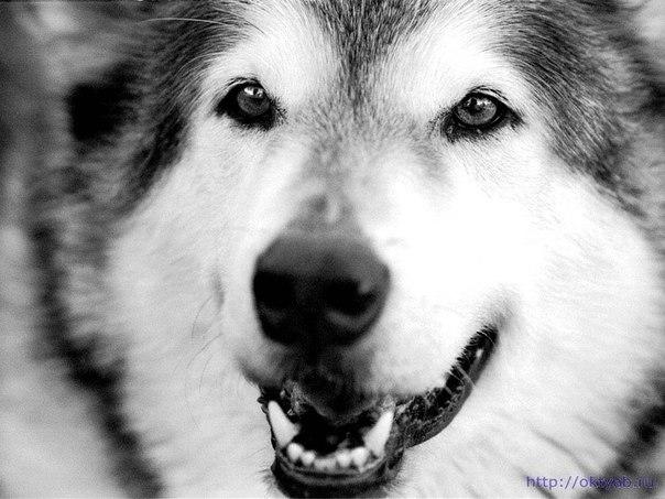 "Все фото из раздела  ""Wolfs "".  Фотогалерея."
