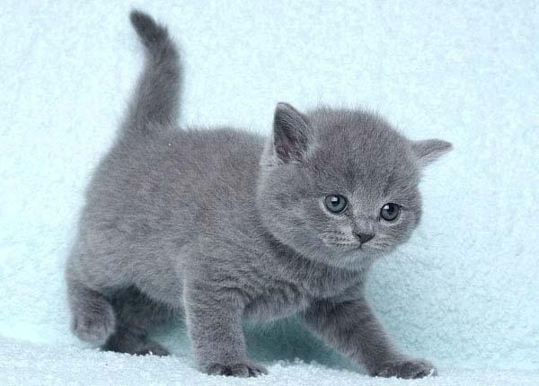 Британцы ( британские коты ) updated the ...: vk.com/club39769951