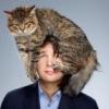 КотоГалерея - клуб любителей кошек :)
