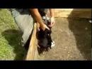 Очень злые щенки (Прикольные собаки и кошки) evil puppies