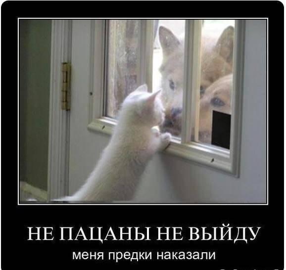http://cs303606.vk.me/v303606265/4fa8/w3f_QlmMRFQ.jpg