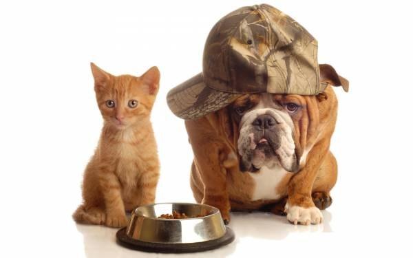 Животным нужна ваша помощь!