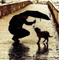 Картинки по запросу собака друг человека