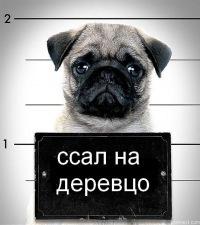 Максим Сафонов, 8 декабря 1983, Новосибирск, id181786316