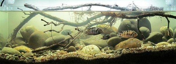 Конкурс дизайна биотопных аквариумов JBL 2014 1xZ31G5Evps