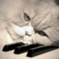Kitty Yo, Москва - фото №14
