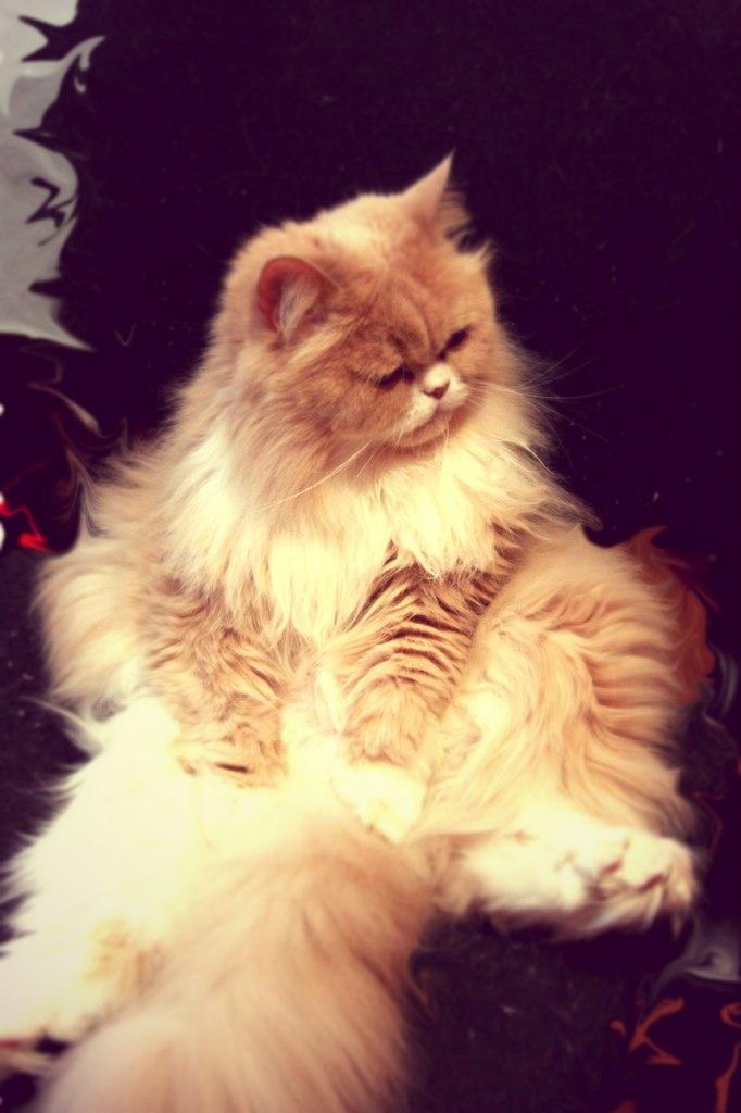 Kitty Yo, Москва - фото №7