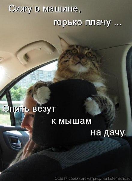http://cs303711.userapi.com/v303711521/31aa/Uz6XeKv7hC4.jpg