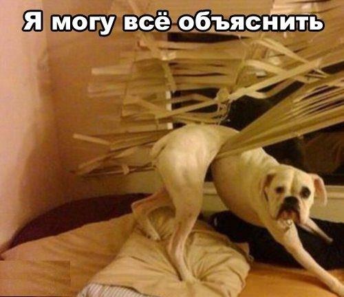 http://cs303712.userapi.com/v303712832/c54/TGvRA6NK7L8.jpg