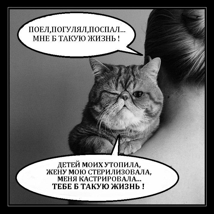 Ростовые фигуры девушек в ринге сказал: