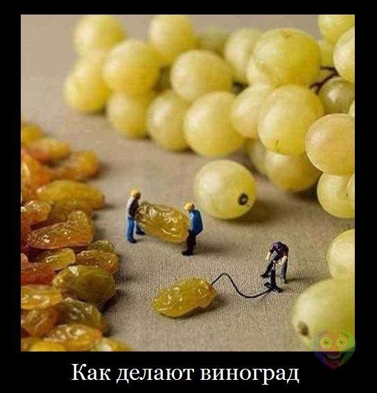 картинки прикольные про еду