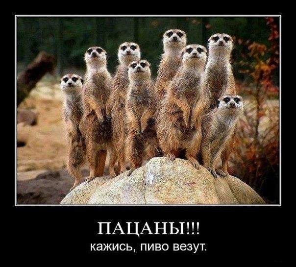ржачные картинки на аву: