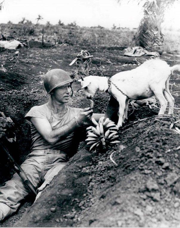 Солдат делится бананами с козлом. Бой за Сайпан. 1944 год