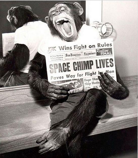 Шимпанзе позирует фотографу после удачного полета в космос. 1961 год