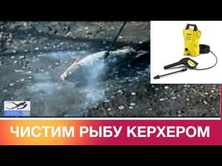 Чистим крупную рыбу Керхером. Как быстро почистить рыбу. Сlean fish Karcher