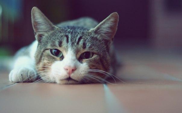 Няшные фото кота
