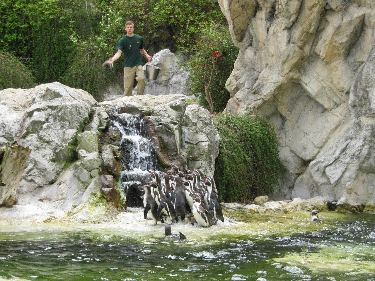 Выиграй билеты на «Пингвинов Мадагаскара» 2