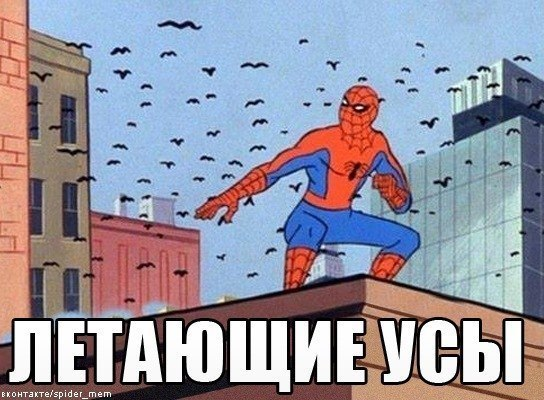 ак сука: