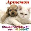 Artemon Neotlozhka