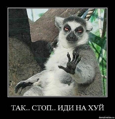 Яценюк поручил Минфину срочно найти средства на покупку школьных автобусов - Цензор.НЕТ 8635