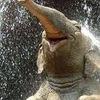 Éléphant heureux