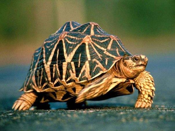 Черепаха 30 лет прожила без еды