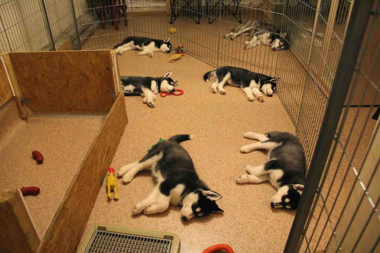 уход за собаками живущими в вольере
