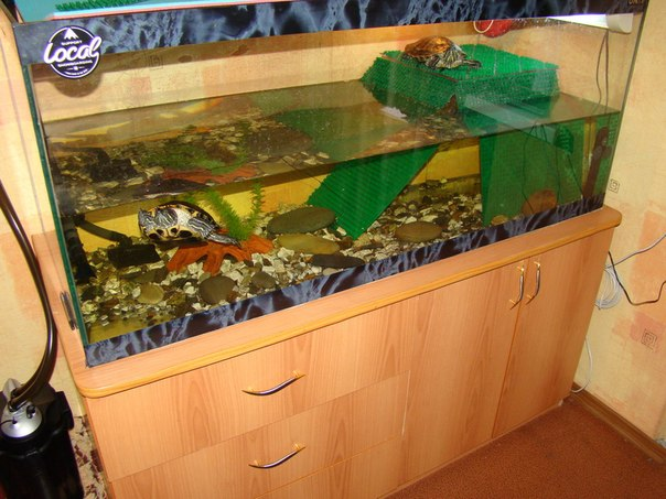 Сколько стоит аквариум для красноухой черепахи