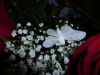Анастасия Яковлева-Фомина, 6 марта 1998, Улан-Удэ, id158822468