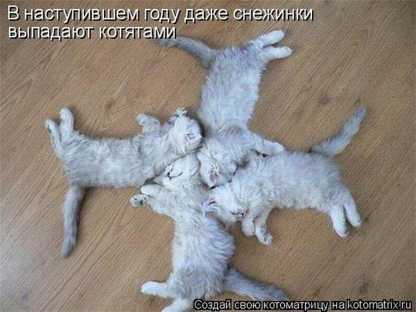 http://cs304215.vk.me/u968029/-14/x_e418927c.jpg