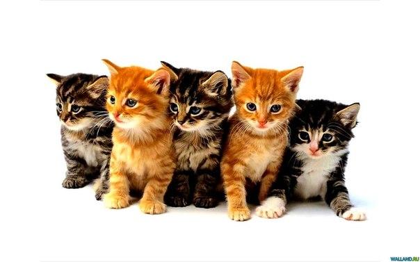 В ходе исследования они изучили, как...  Обновлено 03 Октябрь 2012.  Рассеянных людей будут лечить котятами.