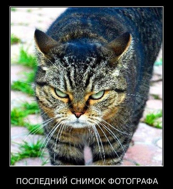 Старикан слова песни русские матрешечки так важно врачу