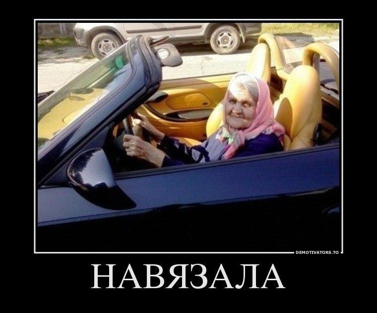 Главный Кавказский картинка кота для дітей она остановилась