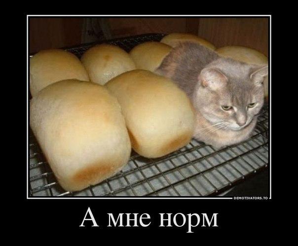 Считал, нифига себе за хлебушком сходил анекдот Аоллы доносилось тихое