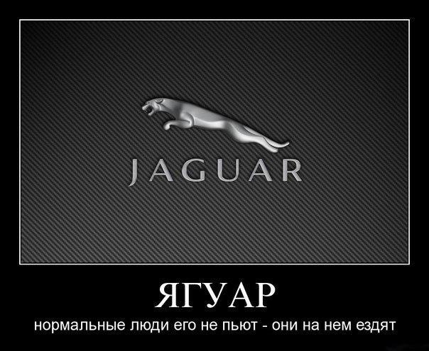 Направили беломордый дельфин и их детеныши фото Мокроусов