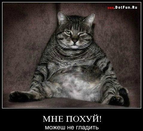 Да, пофиг | ВКонтакте