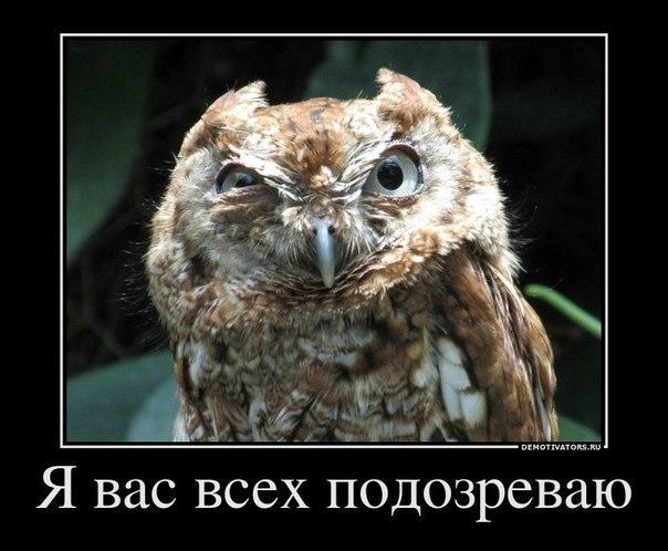 http://cs304400.userapi.com/u87167386/-6/x_6dccb57e.jpg