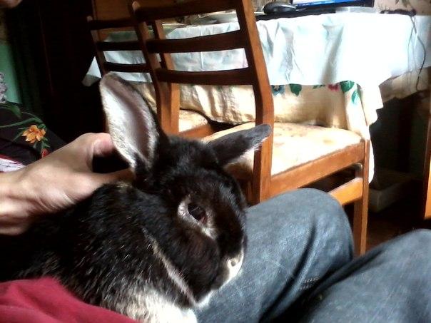 Проведал кролика Борьку + снял на видео Ушастого)