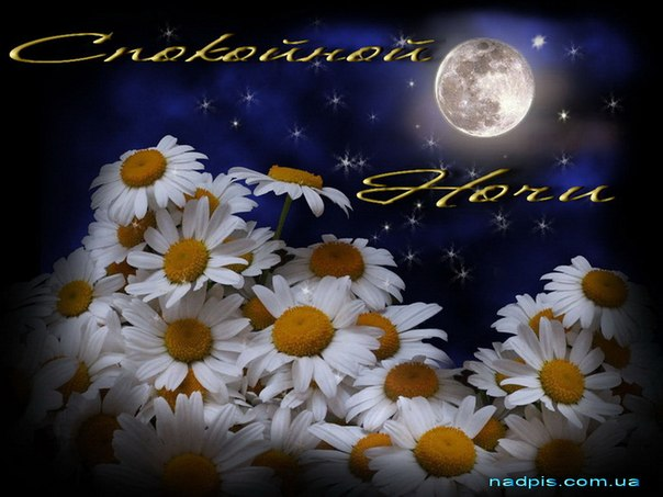 Чтобы установить красивую картинку Ромашки на фоне звездного неба в...