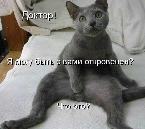 Если он побежал то это кот