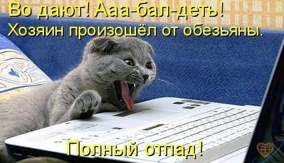 http://cs304606.userapi.com/v304606343/4b1d/RdoYLCMT1es.jpg