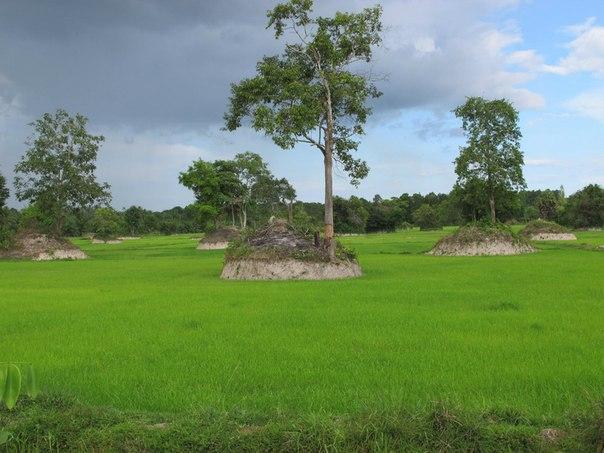 Рисовые поля по дороге в Хуа-Хин