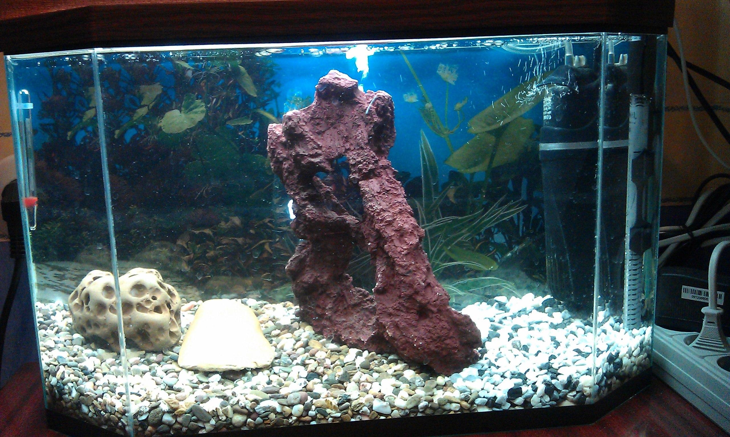 Сомики для аквариума своими руками