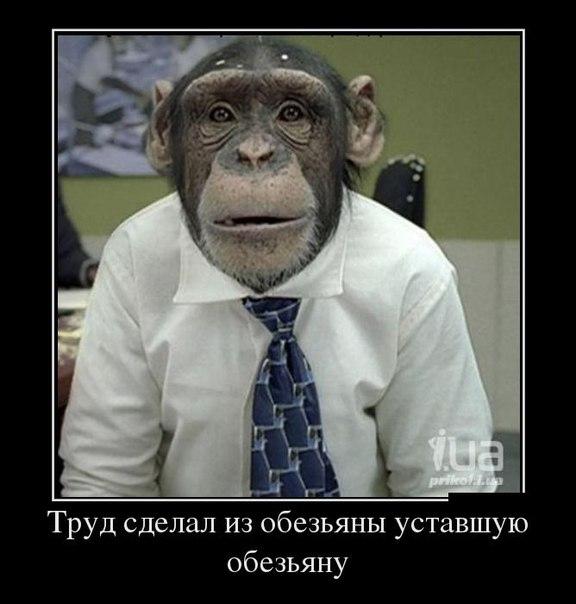 http://cs304704.userapi.com/v304704151/386f/rOfcAYKadqM.jpg