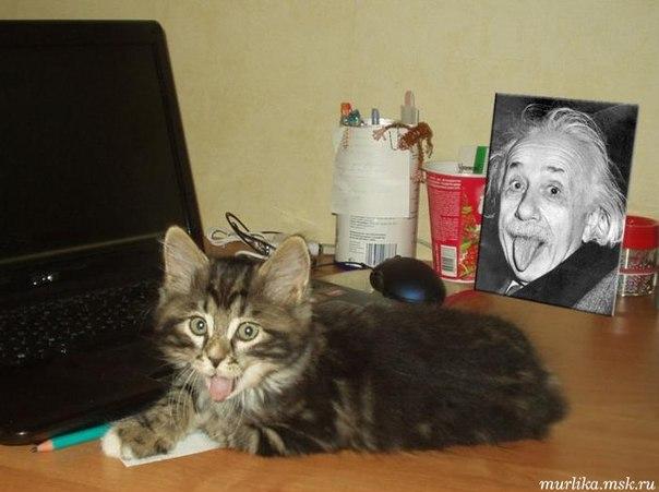 Кот Эйнштейна